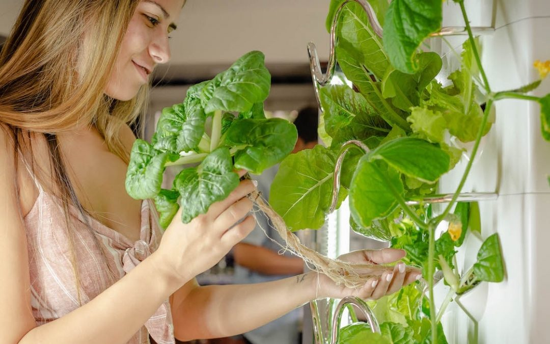 5 Smart Tips For Growing Hydroponic Veggies Indoors
